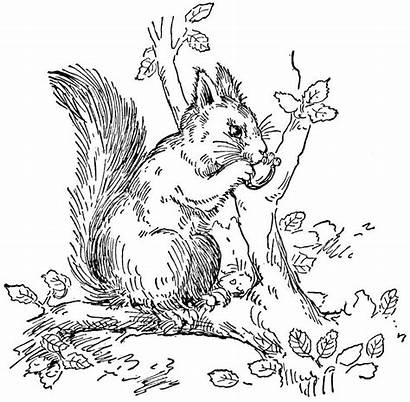 Squirrel Coloring Pages Animals Eating Tree Nut