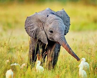 Elephants Elephant Animals Adorable
