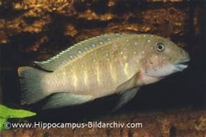 Search Results goby — Seriously Fish
