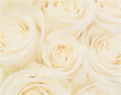 free wedding background images wallpapersafari