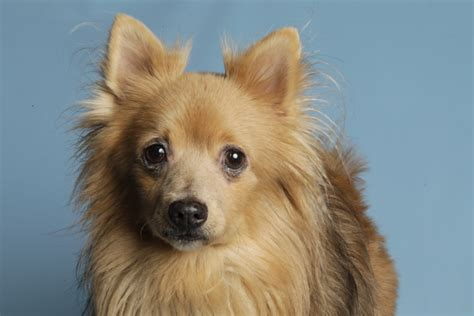 Forever Home Dog Of The Week Truffle News Of Mill Creek
