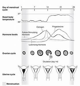 Menstruation Fertility Infertility Charting Cycles | Autos ...