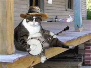 Funny Animals Playing Guitar | Latest Pictures | Funny And ...