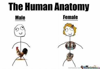 Anatomy Human Memes Sad Female Male Meme