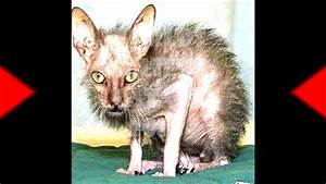 Worlds Ugliest Cat? - YouTube