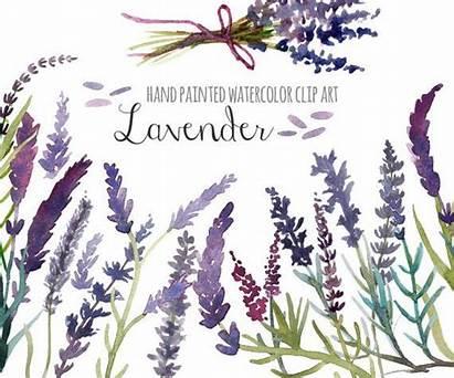 Lavender Clipart Clip Watercolor English Floral Painted