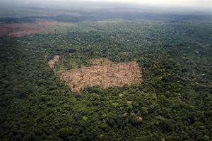 Brazil: Amazon Deforestation Increases for First Time in ...