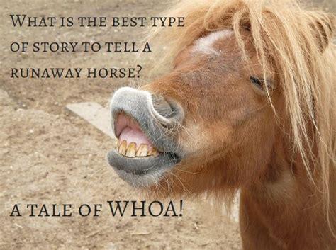 horse funny meme horses jokes joke funniest ever face told humor horseclicks pony dental quotes