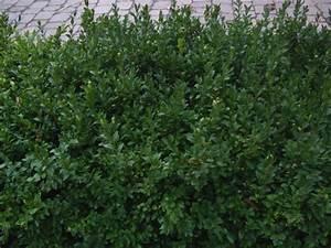 Buchsbaum Schneiden Herbst : garten anders anleitung in bildern zum buchsbaum stecken ~ Lizthompson.info Haus und Dekorationen