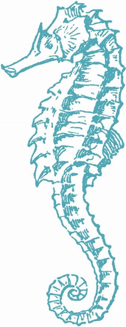 Beach Clip Graphics Fairy Seahorse Sea Horse