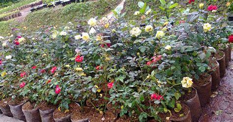 jual tanaman hias bunga jasa pembuatan taman kolam