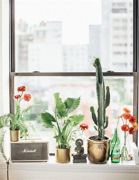 Windowsill Plants by Windowsill Plant Greenhome Apartments