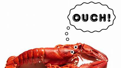 Lobster Shrimp Barnacles Daily Farming