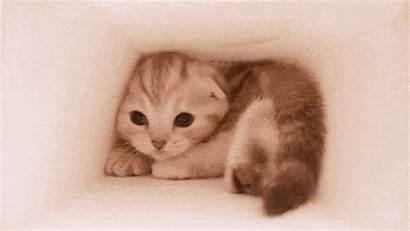 Kitten Cat Scratch Tunnel Disease Gifs Freaking