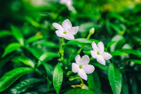 foto stok gratis tentang alam bunga bunga indah close