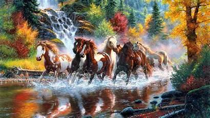 Wild Wallpapers Horses Horse Desktop Range
