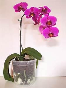 Comment Soigner Une Orchidée : comment entretenir une orchid e or ane ~ Farleysfitness.com Idées de Décoration