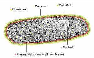 How can prokaryotes live without a nucleus? | Socratic