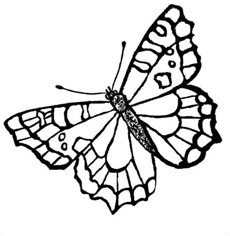 butterfly coloring pages  premium templates