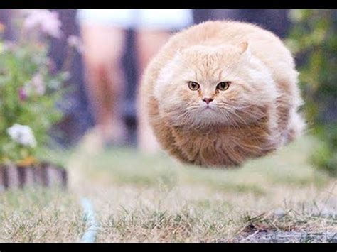 top funny animal compilation  funniest cats  dogs