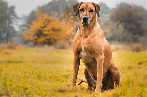 best guard dogs earth and world wordpress jquery css php and web development