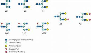 Schematic Diagram Of The Serum Protein