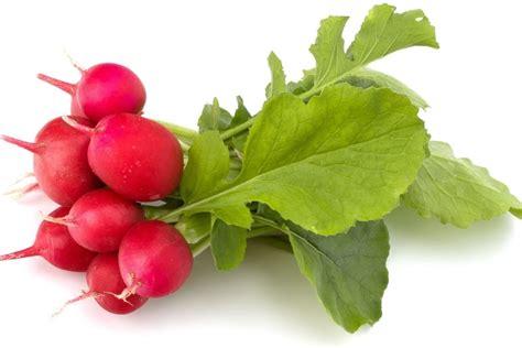 comment cuisiner des radis noirs radis tout sur cette crudité les différents types de