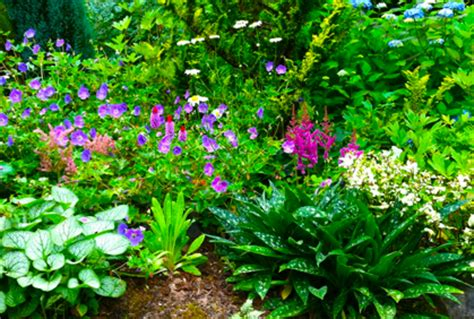 plants for a shaded area landscaping plants for shaded areas ideas designs photo