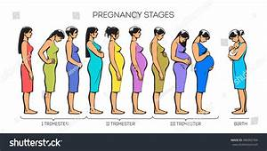 Different Stage Pregnancy Young Girl Stages Stock Illustration 406902784