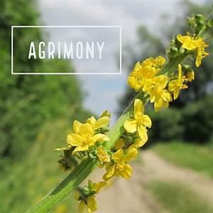 Bach Flower  Agrimony