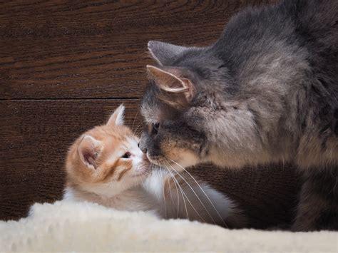 katze an neue besitzer gewöhnen zwei katzen ein klo zwei katzen spielen im klo tag 299
