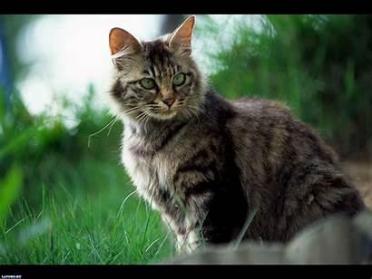 Desktop Wallpapers Cats Latoro Select Save Right