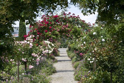 Tipps Vom Profi Rosen Pflanzen Homegatech
