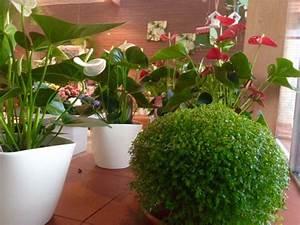 Aktuelle Blumen Im April : blumen f r ihr haus g rtnerei enge erwitte ~ Markanthonyermac.com Haus und Dekorationen
