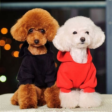 poodles   hairstyles   poodle