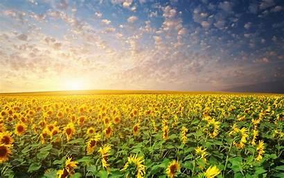 Sunrise Wallpapers Wiki 2560