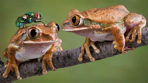 funny frogs hd wallpaper wallpaper studio  tens