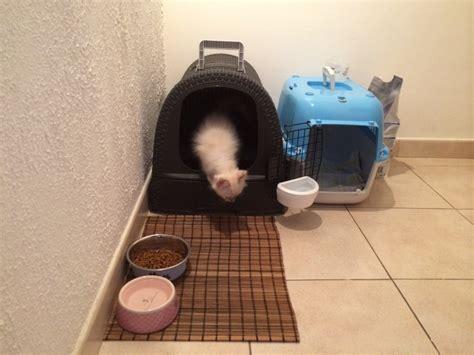 avis sur maison de toilette pour chat anthracite aspect rotin nettoyage facile