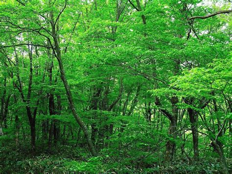 Free Green Forest Background by Green Forest Wallpapers Wallpaper Cave