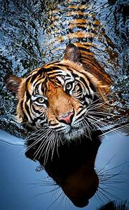 Top 10 Photos of Big Cats - Top Inspired