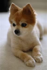 http://www.davidcool.com/wp-content/uploads/2007/04/mako_dog.jpg - photo#29