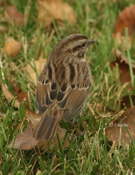 notes from a nw ont backyard oct 2015 bird canada