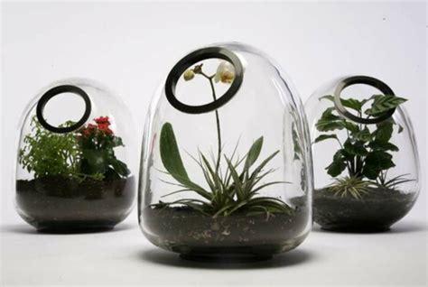 Pflanzen Und Passende Glasgefäße