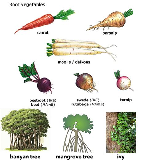 Learning About Different Types Of Roots Vegetables