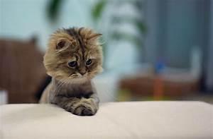 Sharing Funny cats - part 56 (30 pics + 10 gifs) Love ~ I ...
