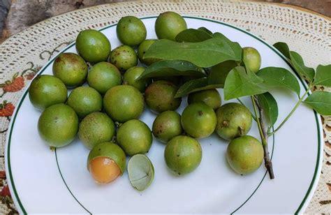 pictures  jamaican food lip smacking food  jamaica