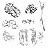 Licorice Illustrations Sweets Drawn Sketch Clip sketch template