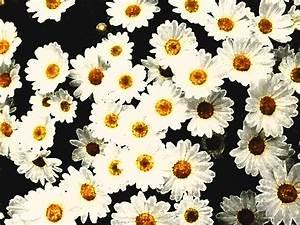 Blumen Bilder Gemalt : gemalte blumen foto bild bearbeitungs techniken digitale gem lde blumen bilder auf ~ Orissabook.com Haus und Dekorationen