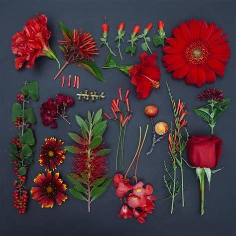 organized floral arrangements produce rainbows  color