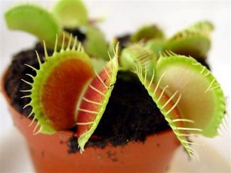 jeux de cuisine de 2014 la dionée attrape mouche une plante étonnante